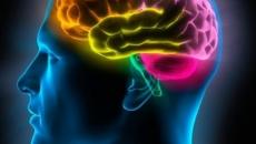 Neuroanatomia do SNC para Neuropsicopedagogos: Conceitos e Práticas