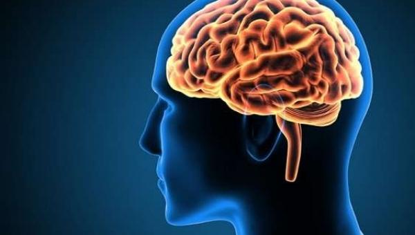 Neuropsicopedagogia Clínica (Complementação)